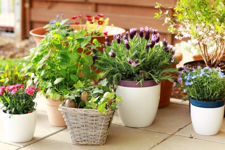 Rosliny Doniczkowe Ktore Sa Korzystne Dla Zdrowia Kwiaty Doniczkowe Ogrod I Kwiaty Infor Pl
